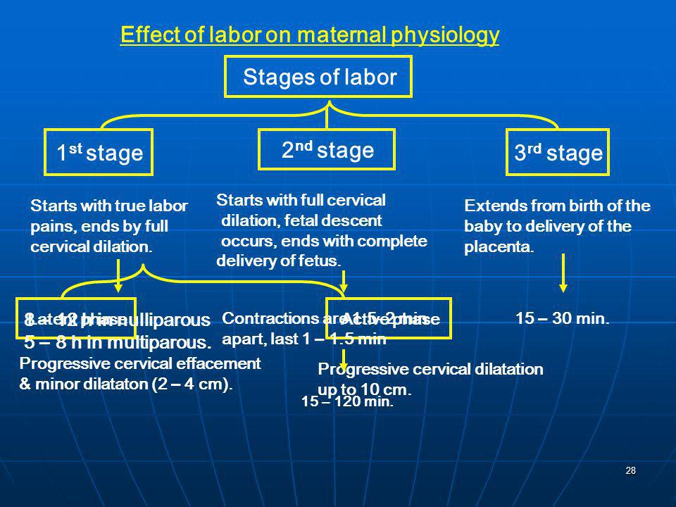 Stages of labor 1st stage 2nd stage 3rd stage