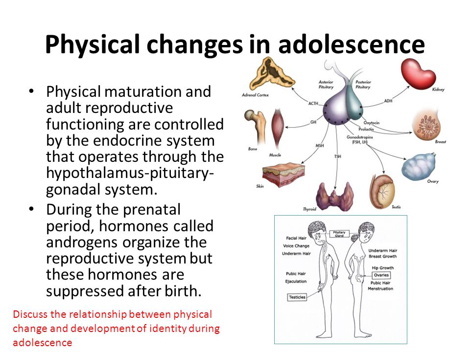 Physical Changes In Adolescence Ppt Video Online Download