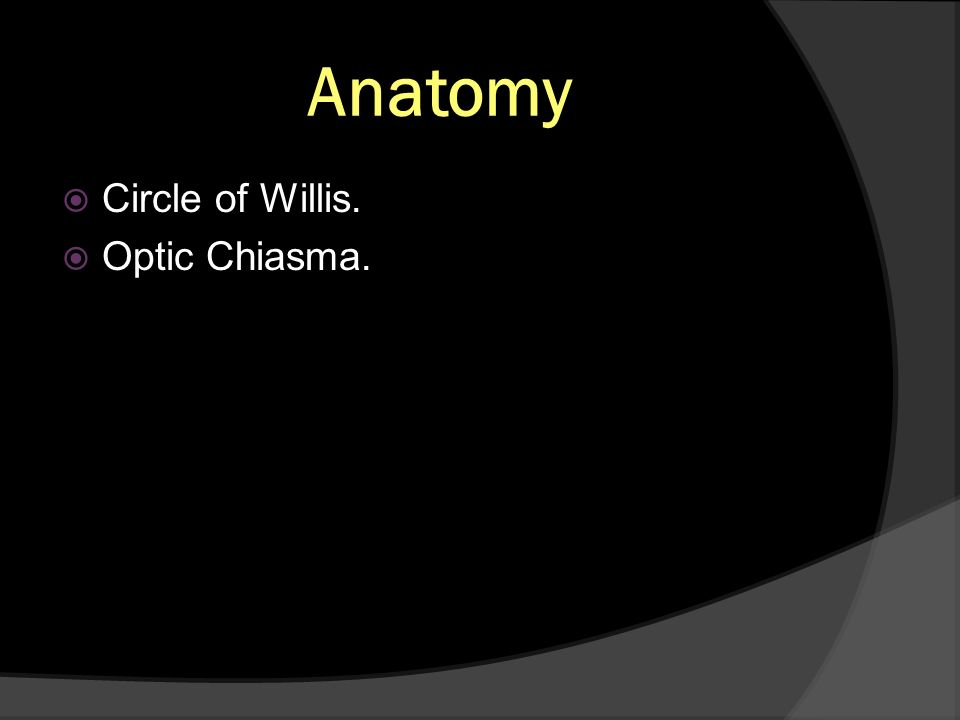 Anatomy Circle of Willis. Optic Chiasma.