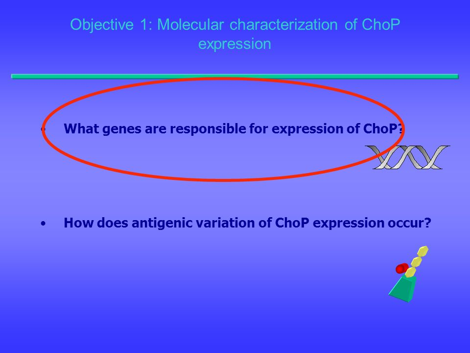 Objective 1: Molecular characterization of ChoP expression