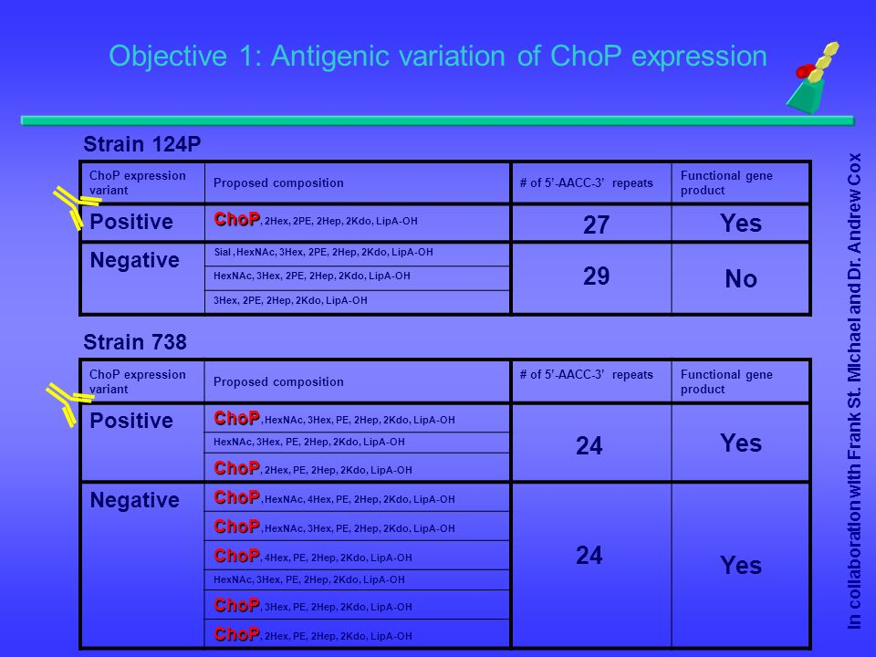 Objective 1: Antigenic variation of ChoP expression
