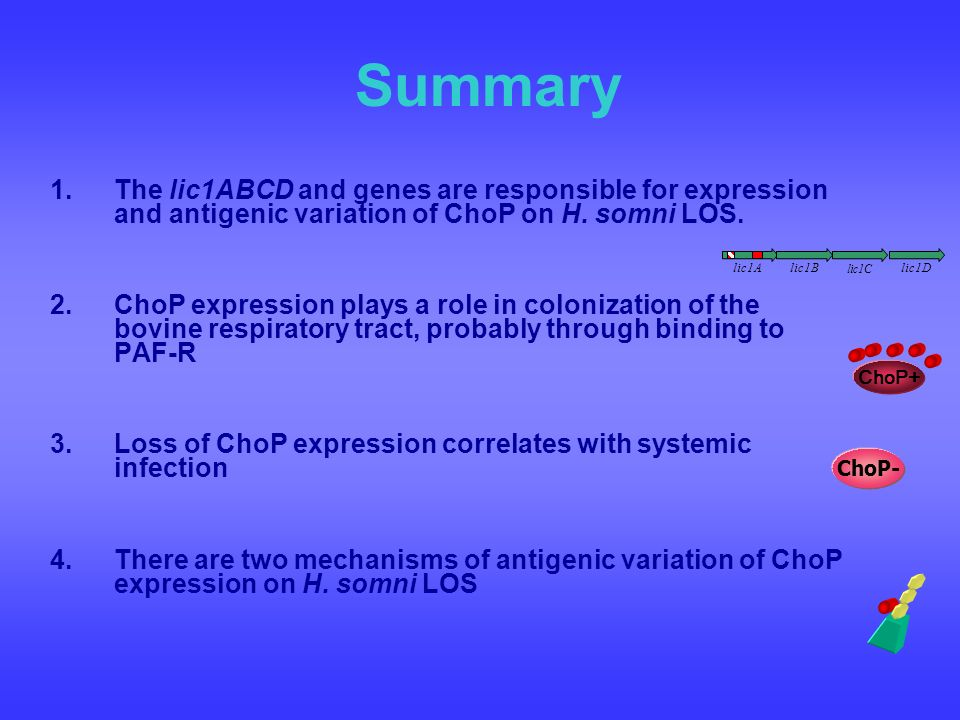 Summary The lic1ABCD and genes are responsible for expression and antigenic variation of ChoP on H. somni LOS.