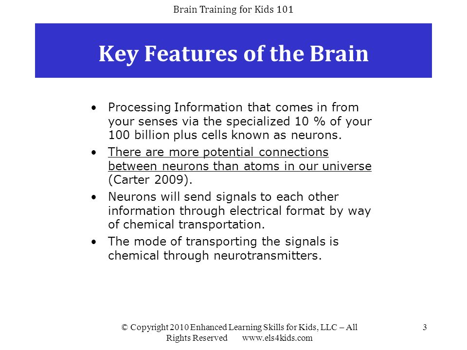 Key Features of the Brain