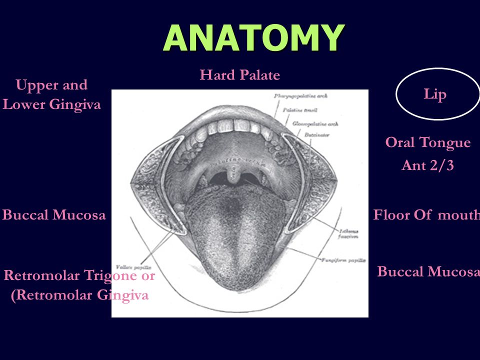 ORAL CAVITY AND OROPHARYNX - ppt video online download