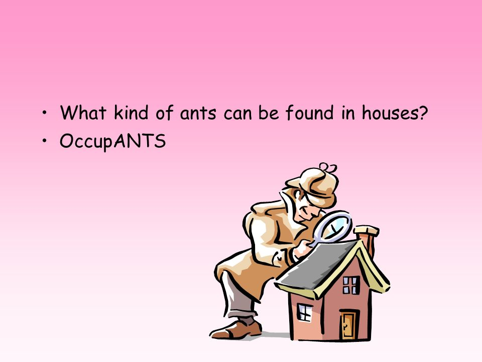 What kind of ants can be found in houses