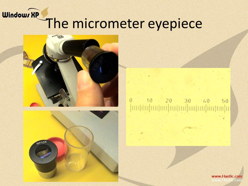 The micrometer eyepiece