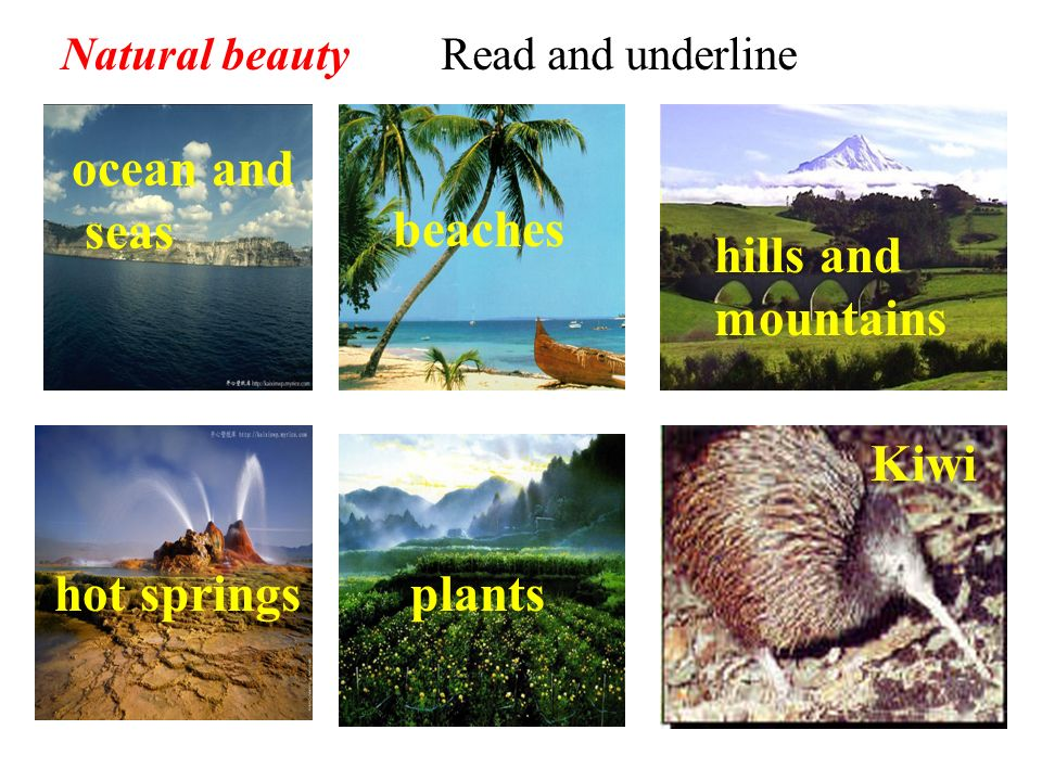 ocean and seas beaches hills and mountains Kiwi hot springs plants