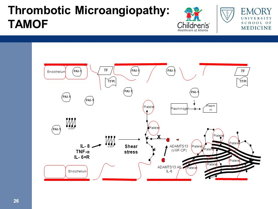 Thrombotic Microangiopathy: TAMOF