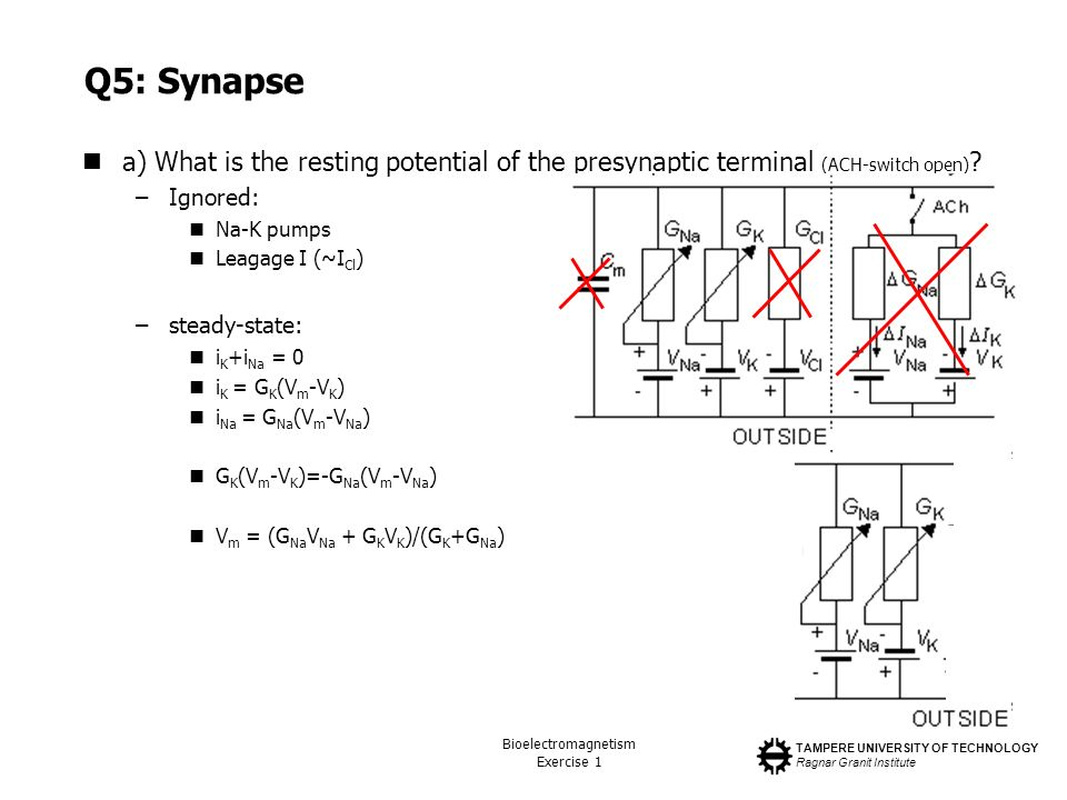 Q5: Synapse a) What is the resting potential of the presynaptic terminal (ACH-switch open) Ignored: