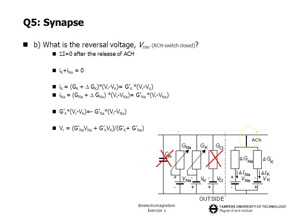 Q5: Synapse b) What is the reversal voltage, Vrev (ACH-switch closed)