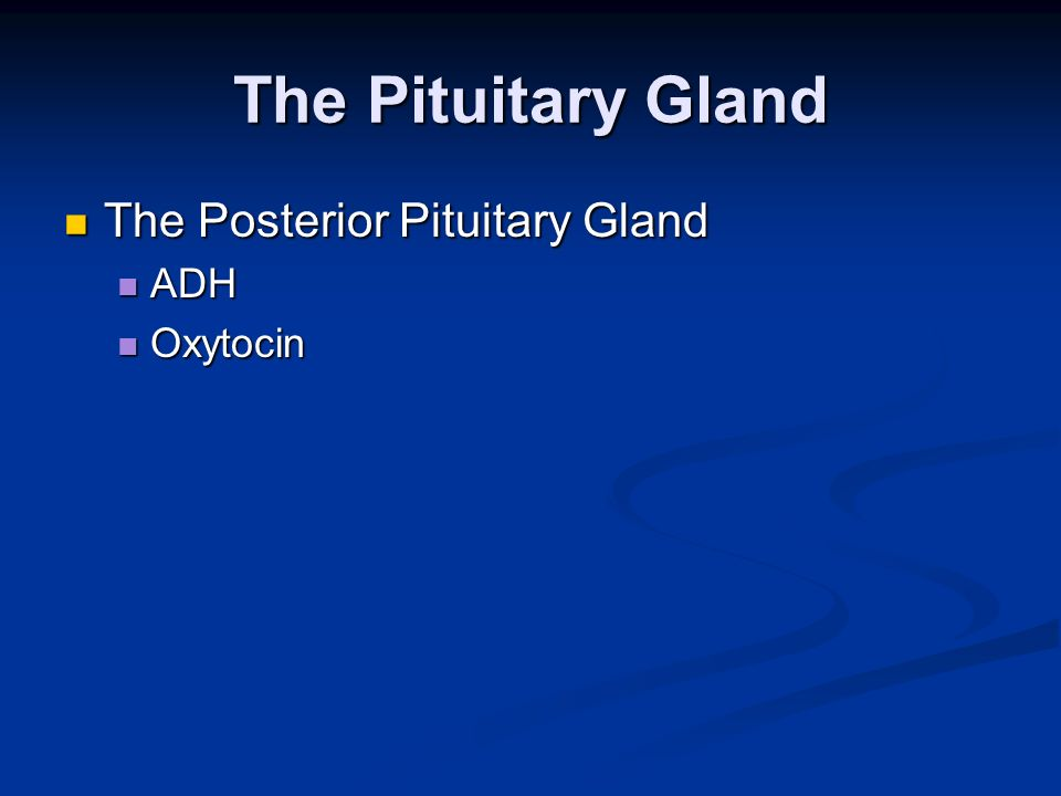 The Pituitary Gland The Posterior Pituitary Gland ADH Oxytocin