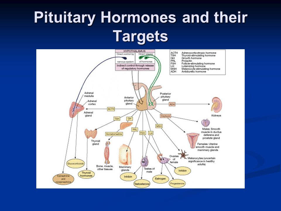 Pituitary Hormones and their Targets