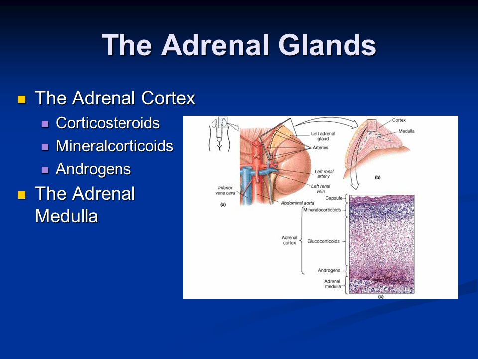 The Adrenal Glands The Adrenal Cortex The Adrenal Medulla