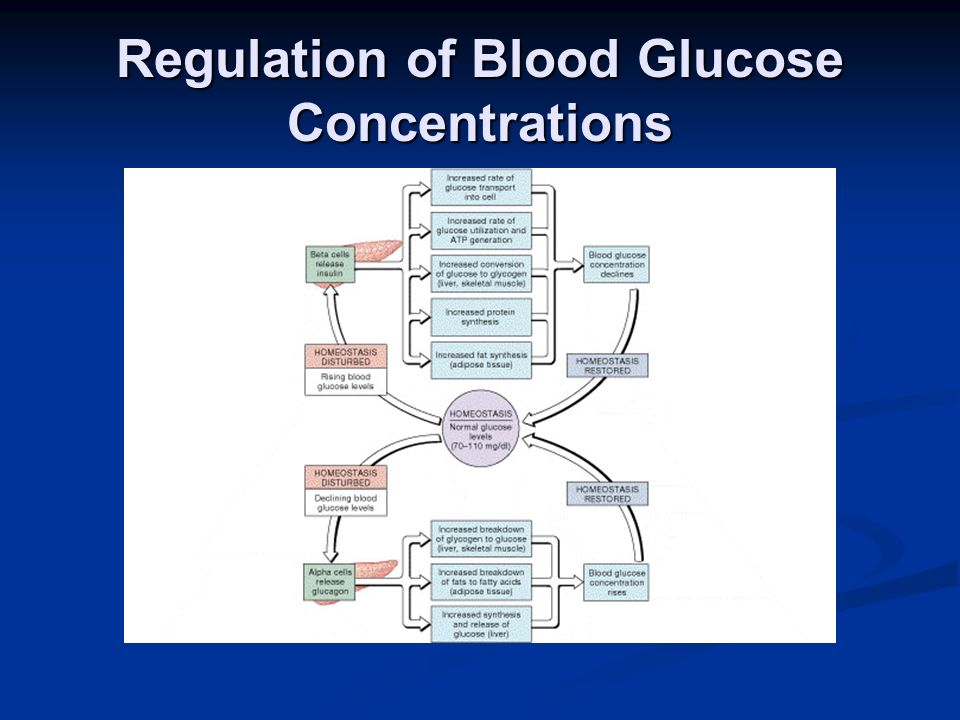 Regulation of Blood Glucose Concentrations