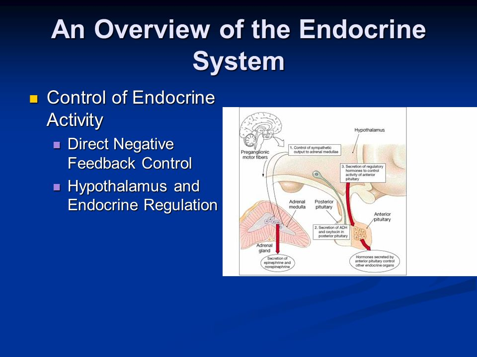 An Overview of the Endocrine System