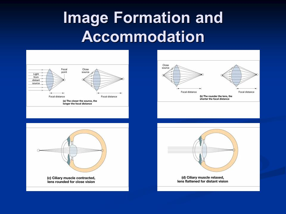 Image Formation and Accommodation