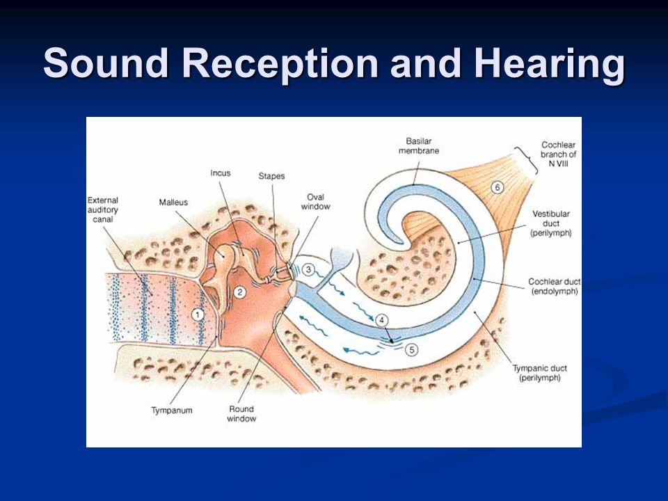 Sound Reception and Hearing