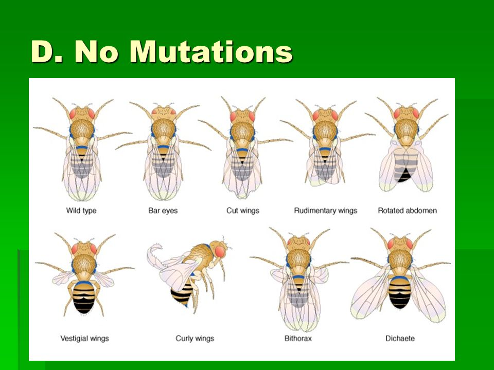 D. No Mutations A mutation would alter the types and numbers of alleles present in the gene pool.