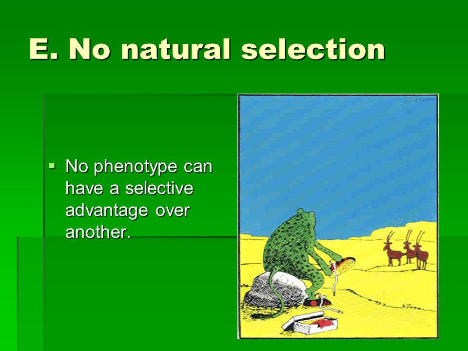 E. No natural selection No phenotype can have a selective advantage over another.