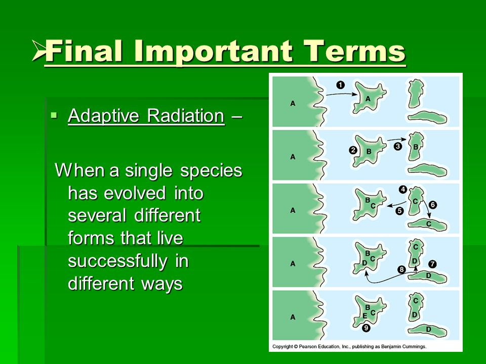 Final Important Terms Adaptive Radiation –