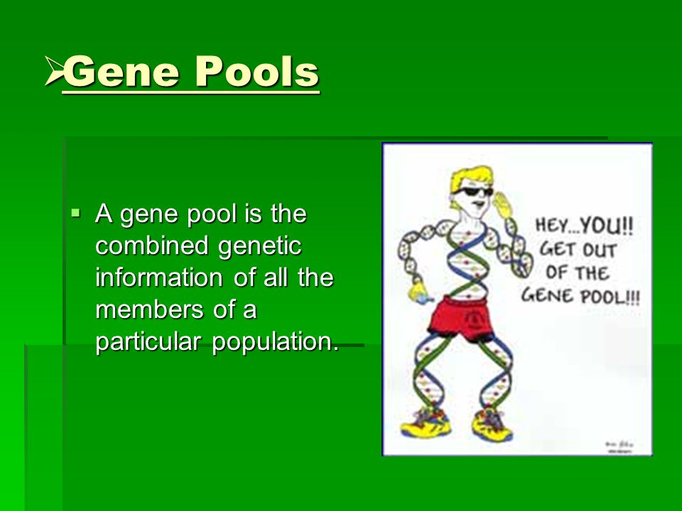 Gene Pools A gene pool is the combined genetic information of all the members of a particular population.