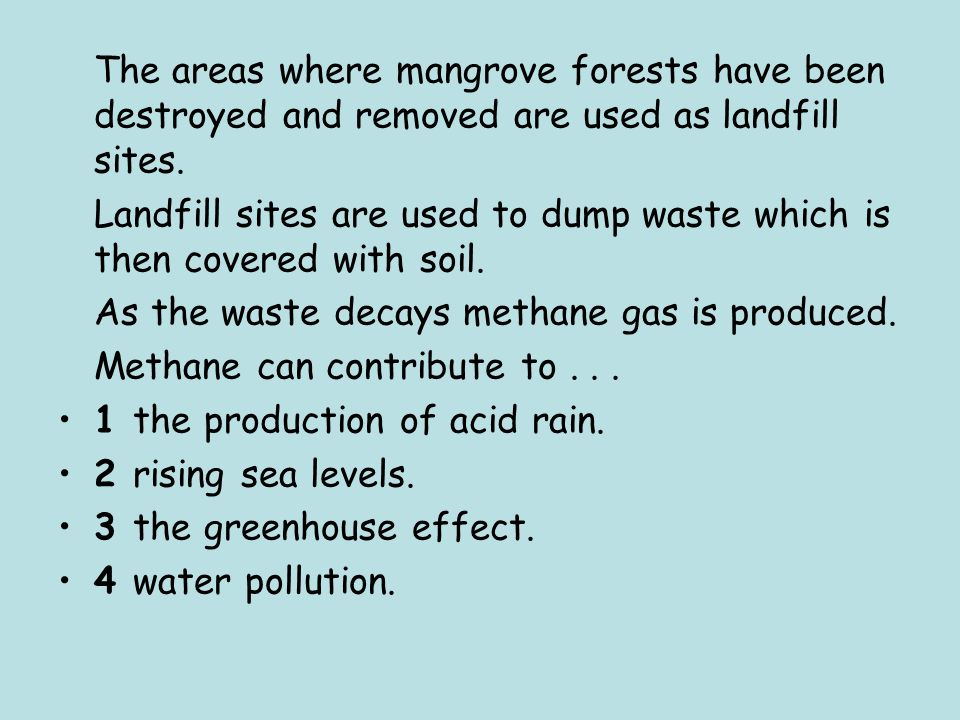 The areas where mangrove forests have been destroyed and removed are used as landfill sites.