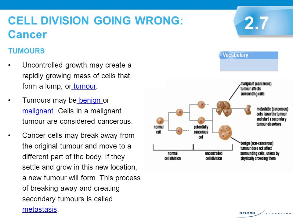 CELL DIVISION GOING WRONG: Cancer