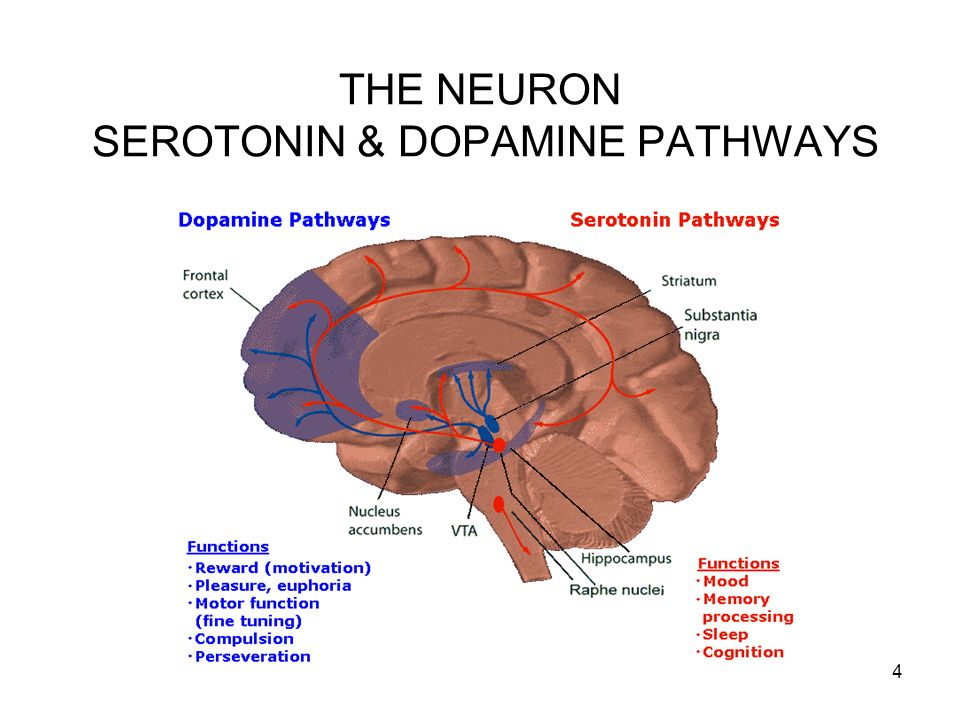 THE NEURON SEROTONIN & DOPAMINE PATHWAYS