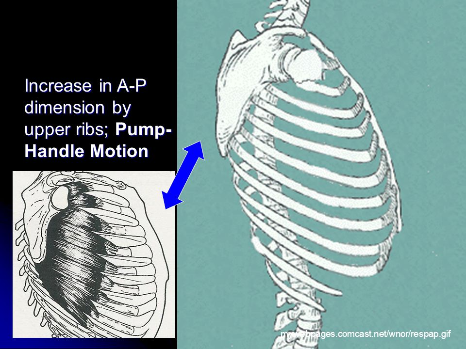 dimension by upper ribs; Pump- Handle Motion