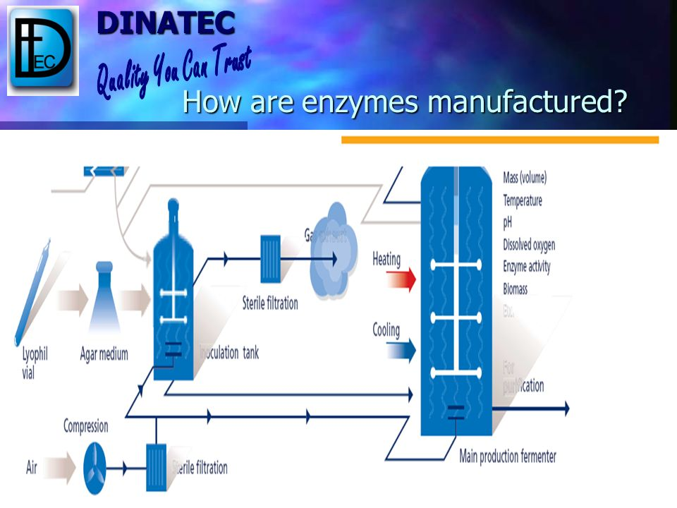 How are enzymes manufactured