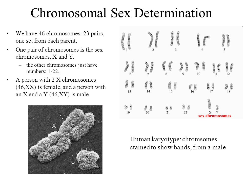 Secrets Of The Y Chromosome