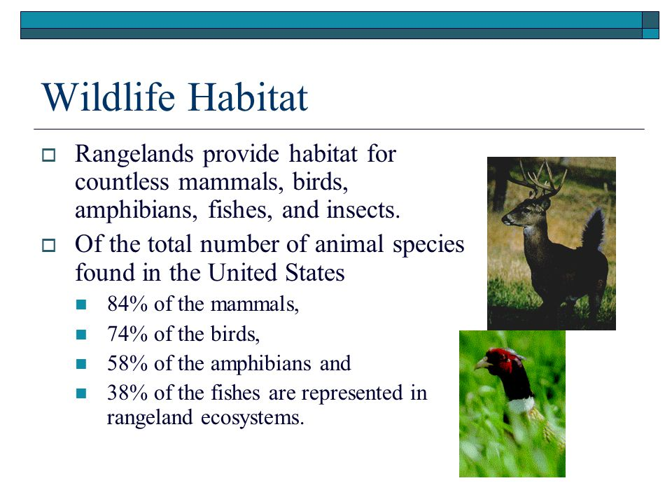 Presentation (.ppt) Wildlife Habitat. Rangelands provide habitat for countless mammals, birds, amphibians, fishes, and insects.