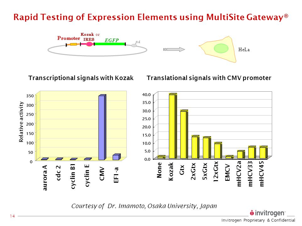 Rapid Testing of Expression Elements using MultiSite Gateway®