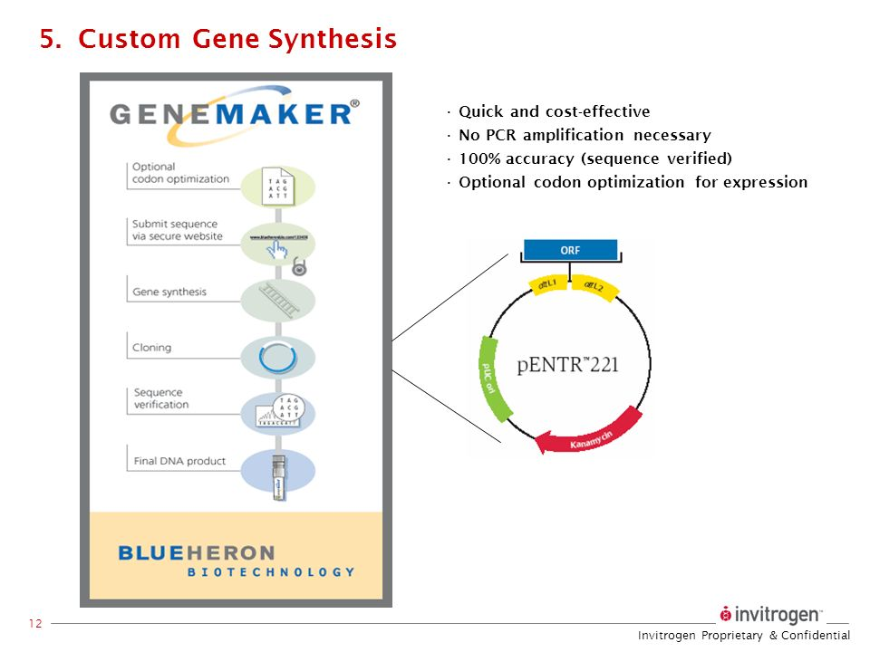 5. Custom Gene Synthesis Quick and cost-effective