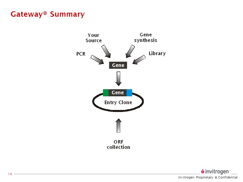 Gateway® Summary A variety of ways to enter the Gateway® system are available, depending on the source of gene sequence.