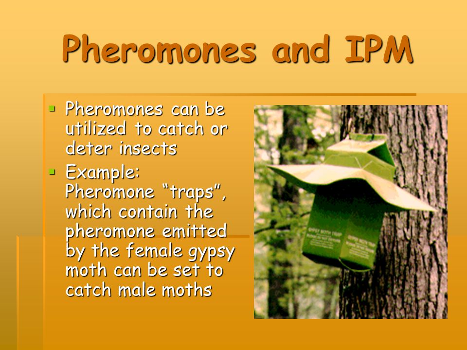 Pheromones and IPM Pheromones can be utilized to catch or deter insects.