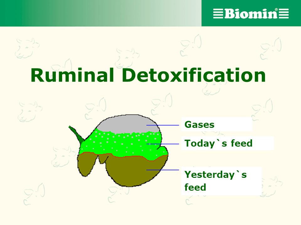 Ruminal Detoxification
