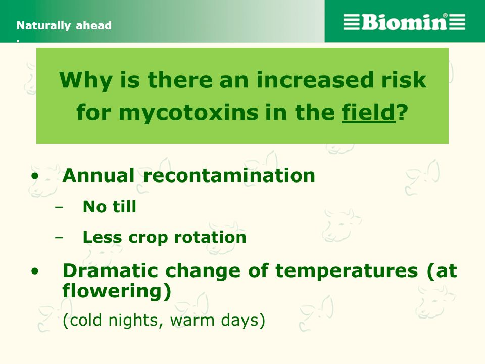 Why is there an increased risk for mycotoxins in the field