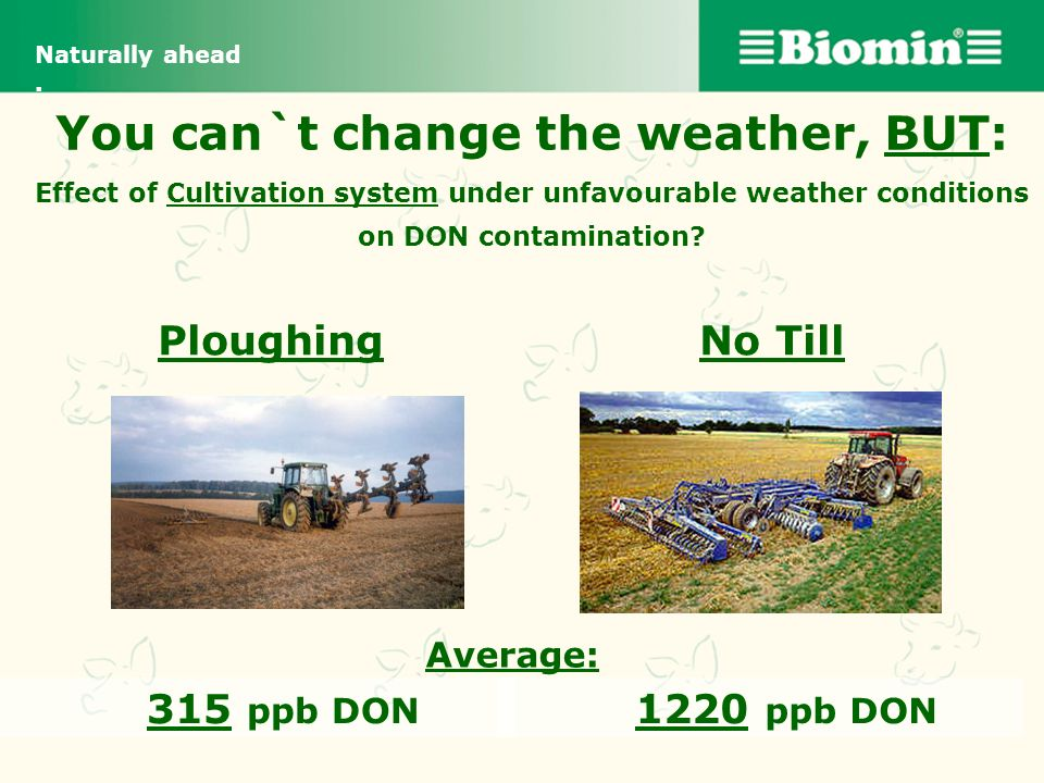 Naturally ahead . You can`t change the weather, BUT: Effect of Cultivation system under unfavourable weather conditions on DON contamination