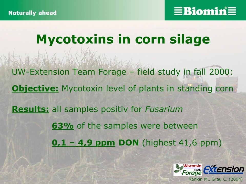 Mycotoxins in corn silage