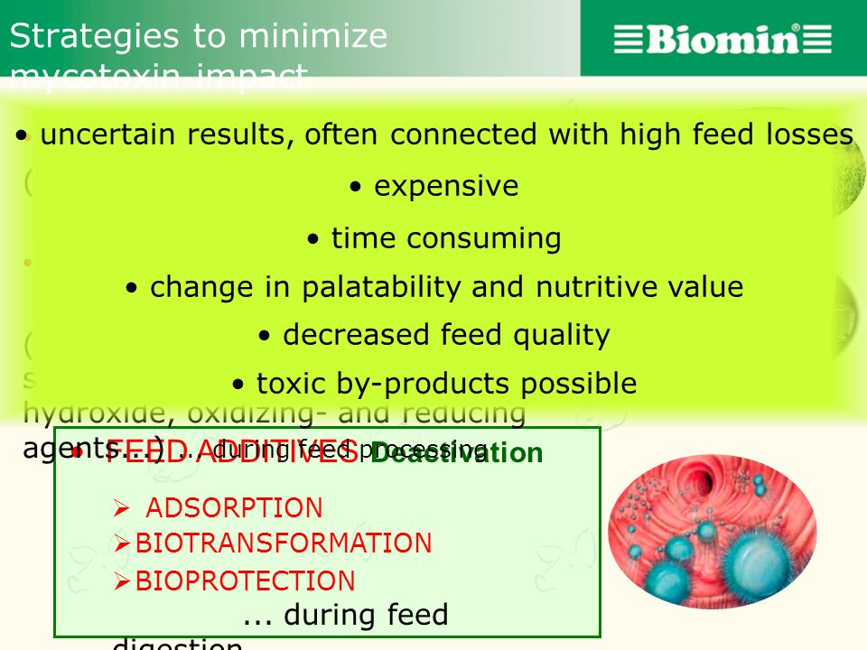 Strategies to minimize mycotoxin impact