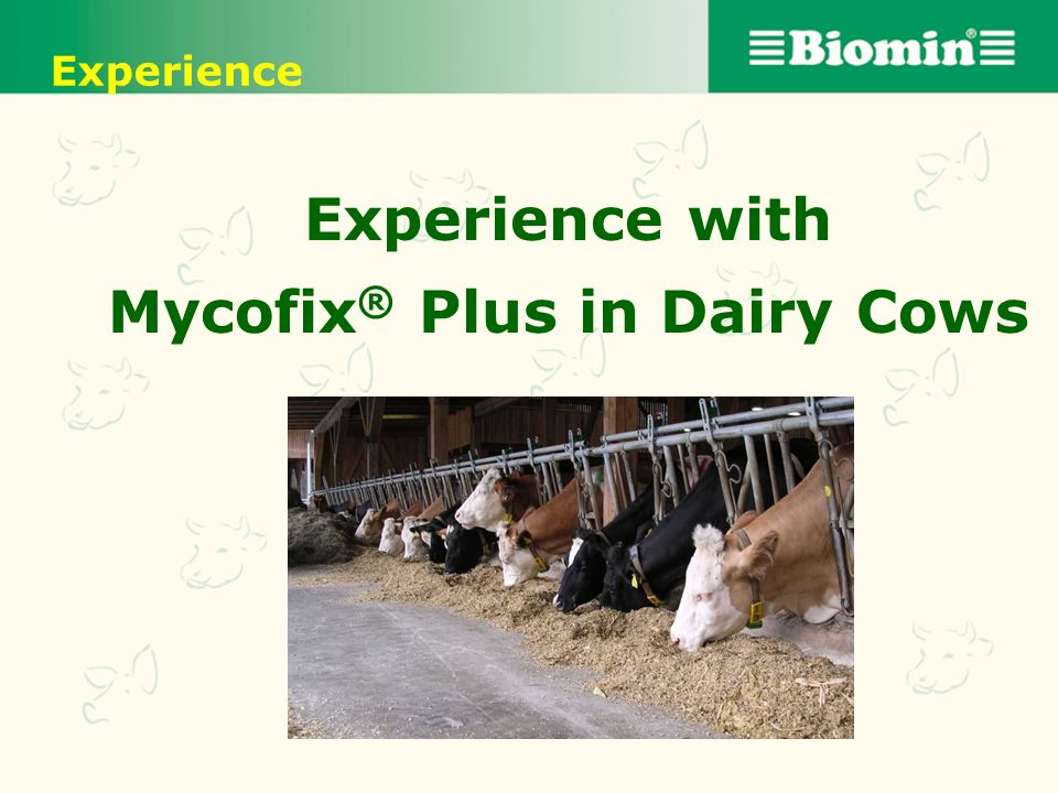 Experience with Mycofix® Plus in Dairy Cows