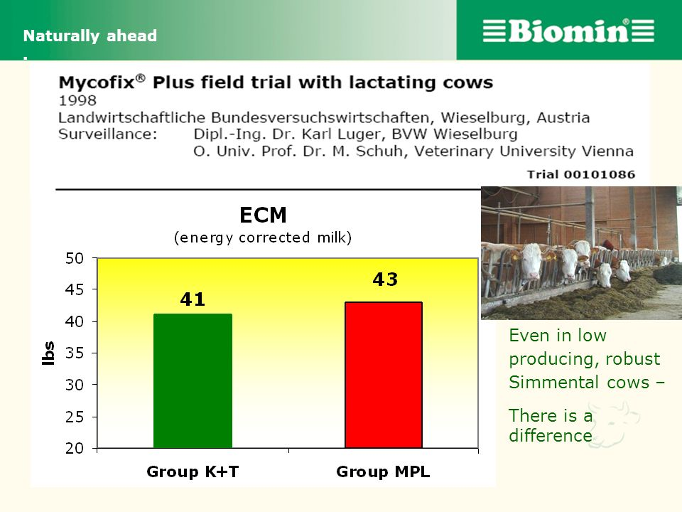Even in low producing, robust Simmental cows –