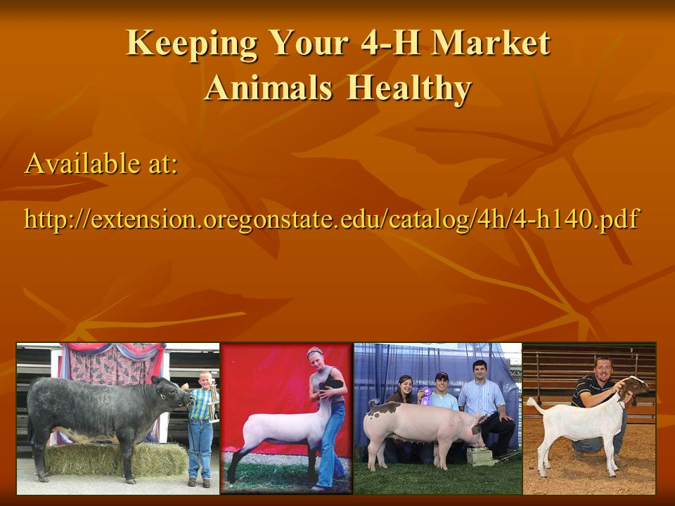 Keeping Your 4-H Market Animals Healthy