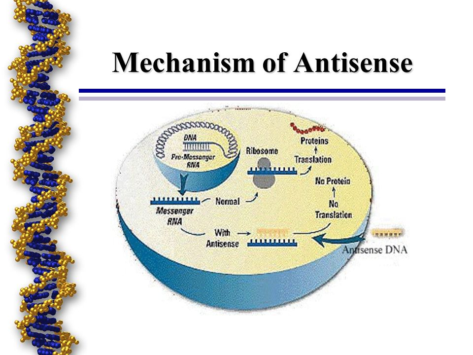 Mechanism of Antisense