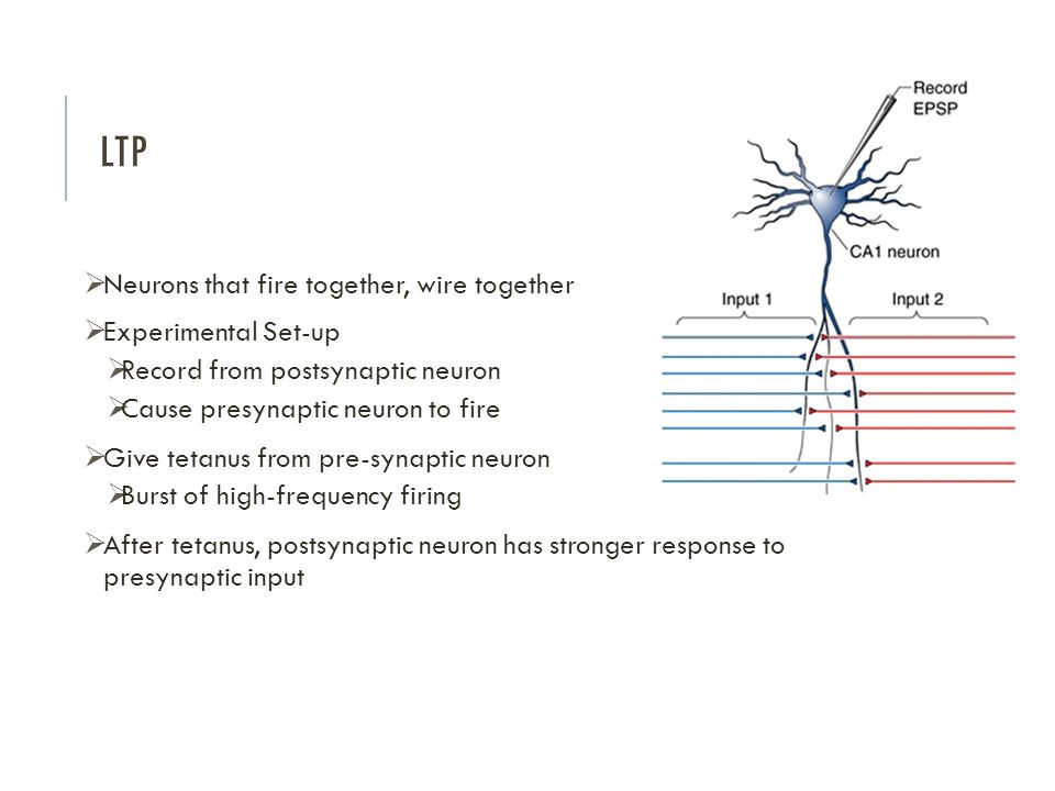 LTP Neurons that fire together, wire together Experimental Set-up