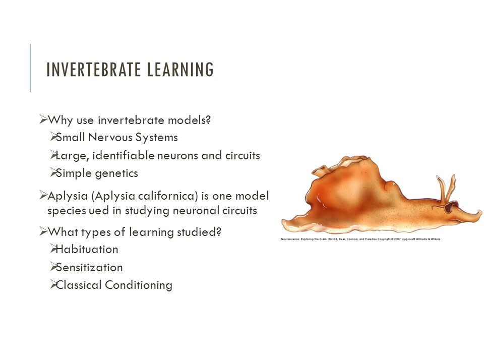Invertebrate Learning