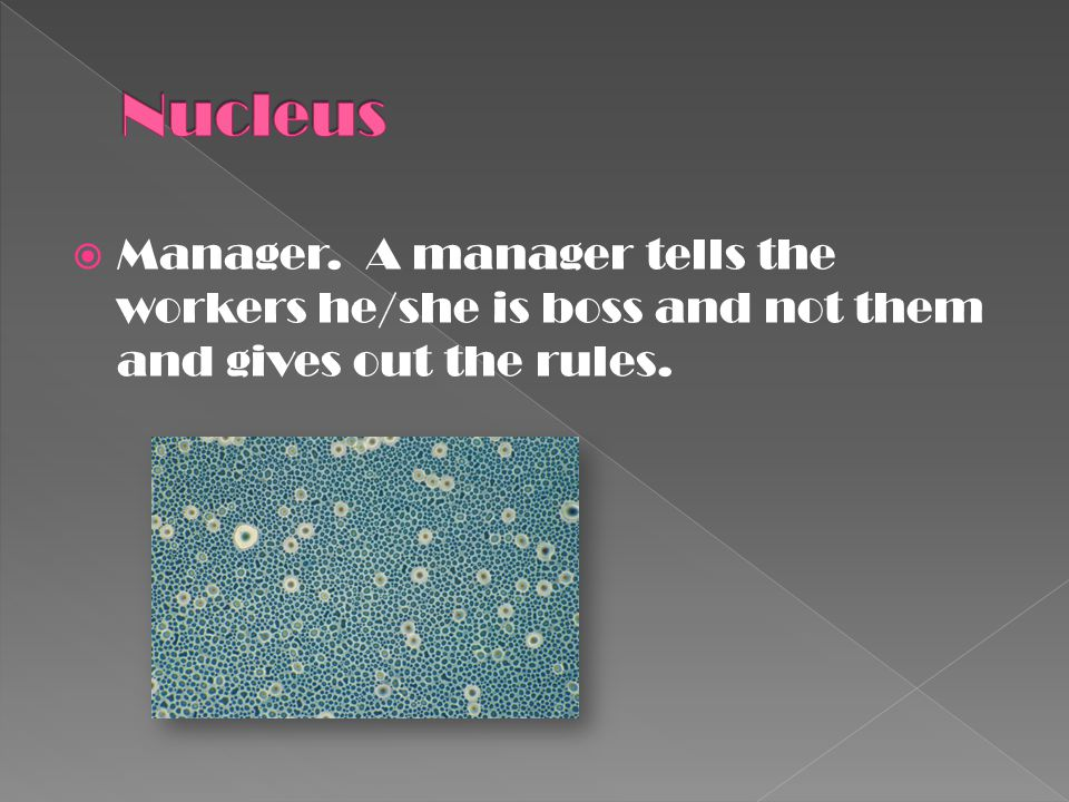 Nucleus Manager. A manager tells the workers he/she is boss and not them and gives out the rules.