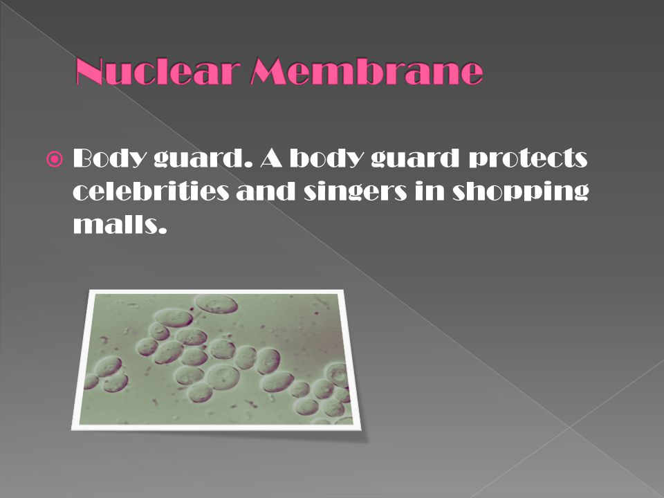 Nuclear Membrane Body guard. A body guard protects celebrities and singers in shopping malls.