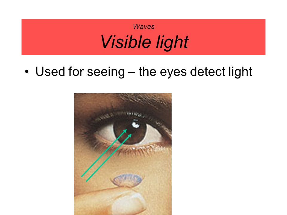 Used for seeing – the eyes detect light